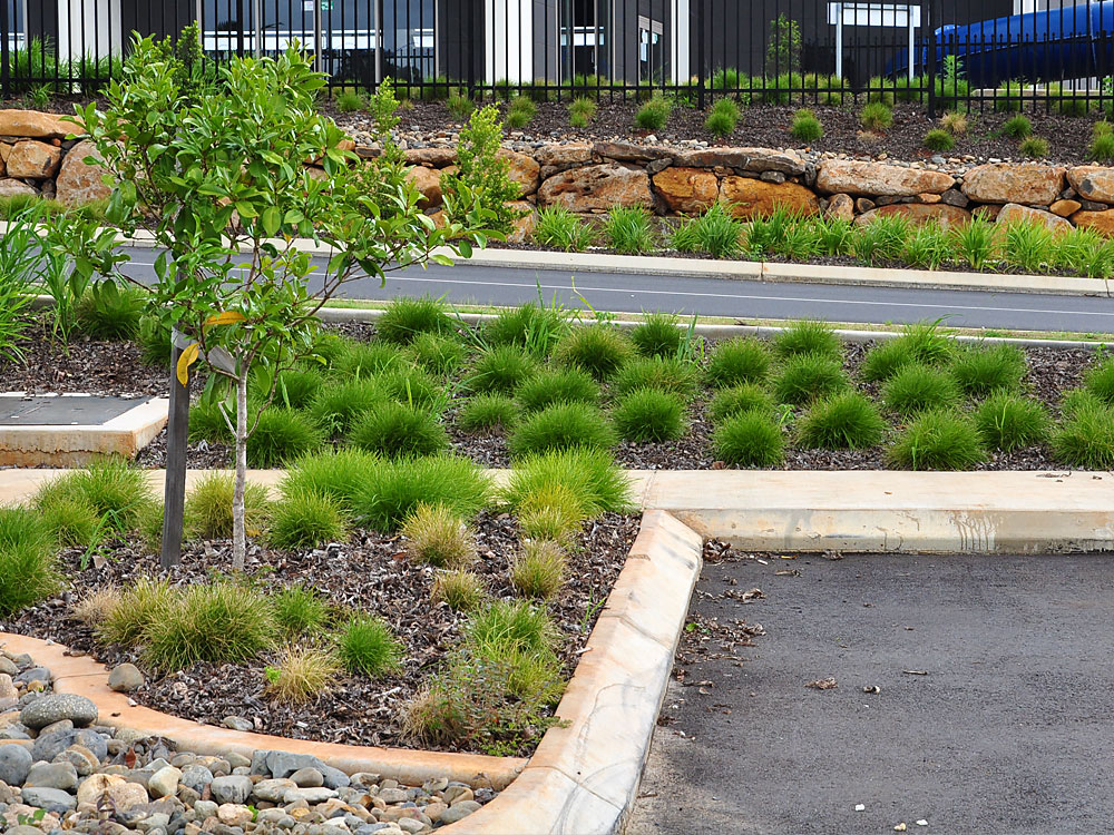 Goonellabah Sports and Recreation Ennismore Field Landscape Architect