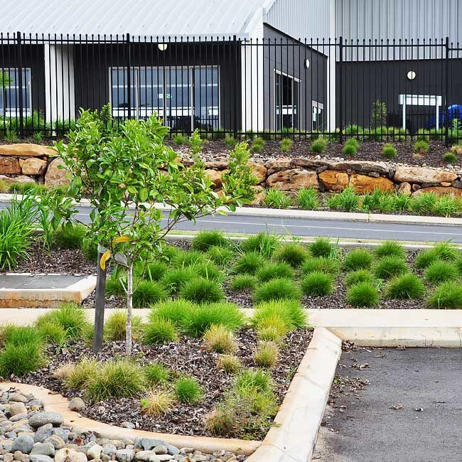 Goonellabah Ennismore Field Landscape Architect02