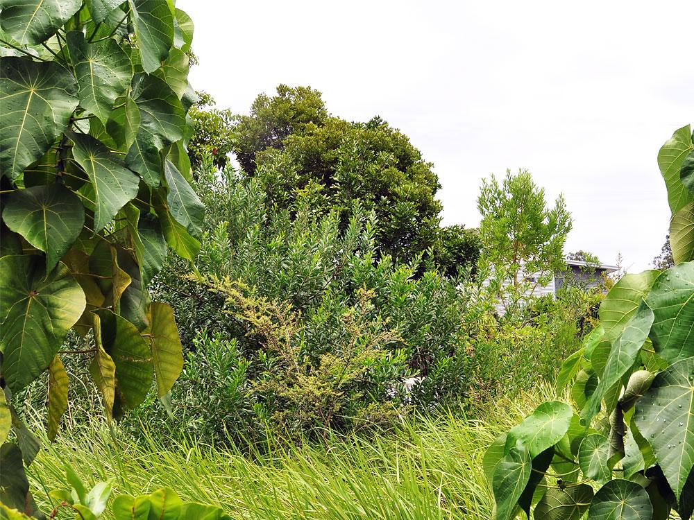 Bayside Ennismore Field Landscape Architect